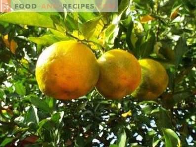 Aceite de bergamota: Propiedades y aplicaciones