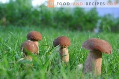Hoe witte champignons in de winter te maken