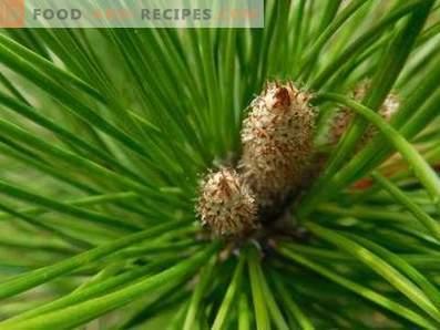 Mermelada de riñón de pino