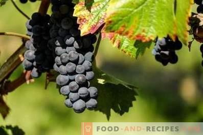 Chach de uvas